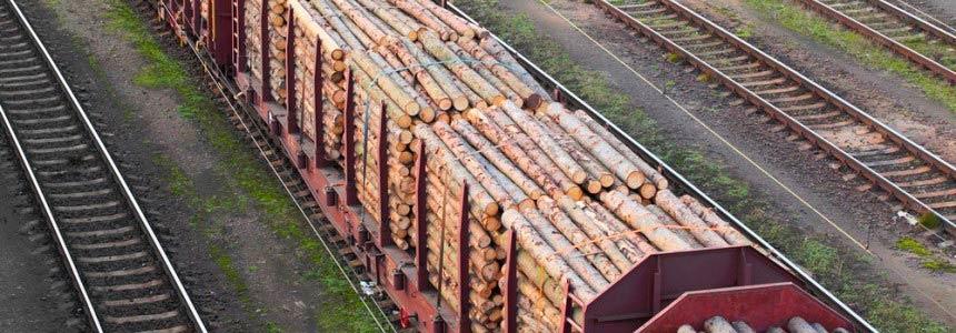 Legno Illegale Unione Europea dichiara guerra al traffico di legname