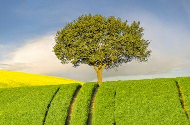 Aggiornamento banche dati del Catasto dei terreni: cosa fare in caso di variazione colturale