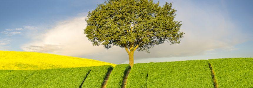 Catasto dei terreni: disponibile elenco aggiornato variazioni colturali