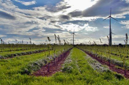 Ambiente: indagine di Intesa San Paolo sul futuro in Agroenergie e Innovazione