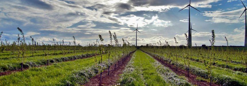 Indagine di Intesa San Paolo sul futuro in Agroenergie e Innovazione
