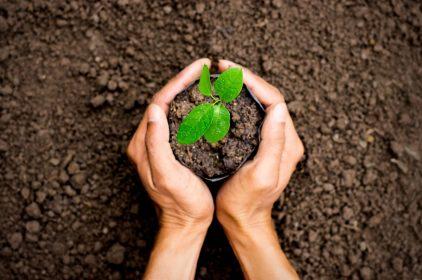 Trattamenti fitosanitari: normativa e classificazione dei prodotti
