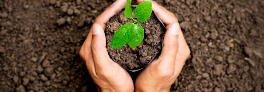 mani-pianta-terra