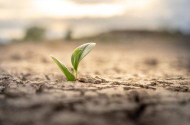 Cos'è il degrado del suolo in agricoltura: le cause e i rimedi
